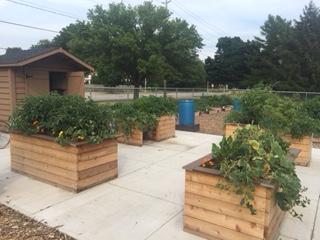 Accessible garden plots at Maple Park Community Garden